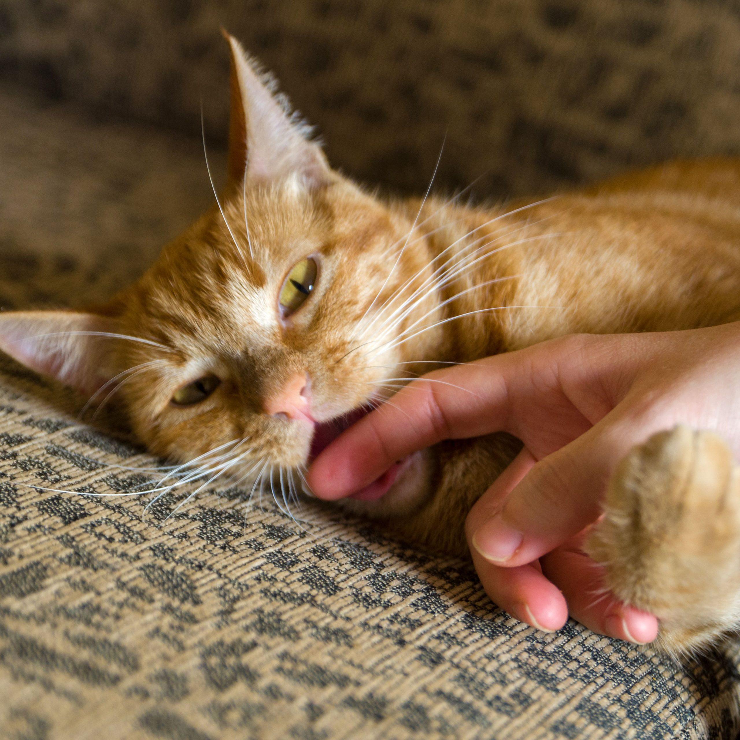 Practicing Good Kitten Care!